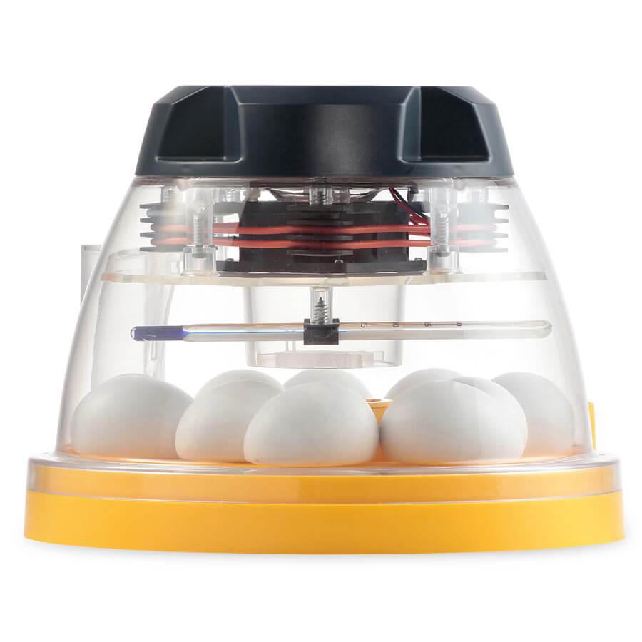Conseils pour l'incubation artificielle Couveuse-mini-2-eco-couveuse-manuelle-10-oeufs-2